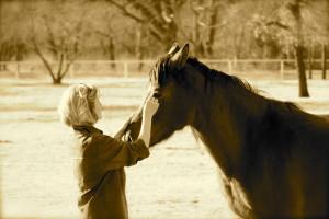 Darcie_Horse