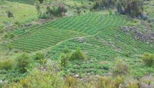 601 farmers plot